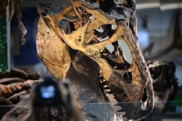 """Canada Discovers T-Rex's Dinosaur Cousin Named """"Reaper Of Death"""""""