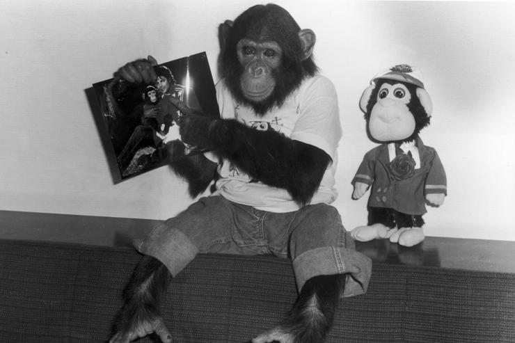Bubbles, a chimpanzee owned by popular entertainer Michael Jackson, dressed in jeans and a t-shirt, holds up a photo of himself and the singer, while a plush Bubbles doll stands beside him, Tokyo, Japan, 1987